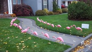 Flocked CPHS XC Team Fundraiser!